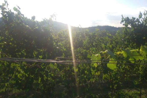Serata_Wine