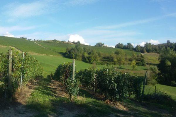 Serata_Wine_10