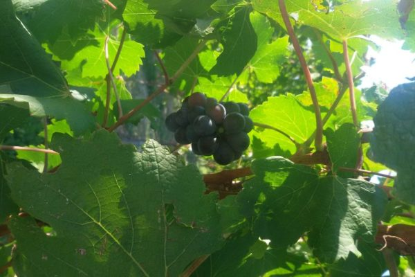 Serata_Wine_12